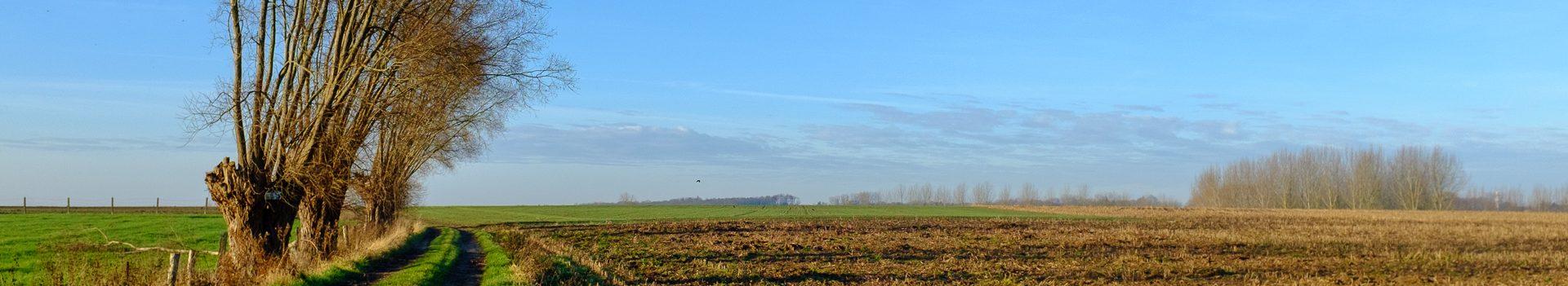 Dinsdagwandeling Everbeek